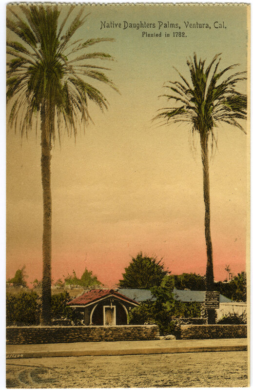 Native Daughters Palms Postcard