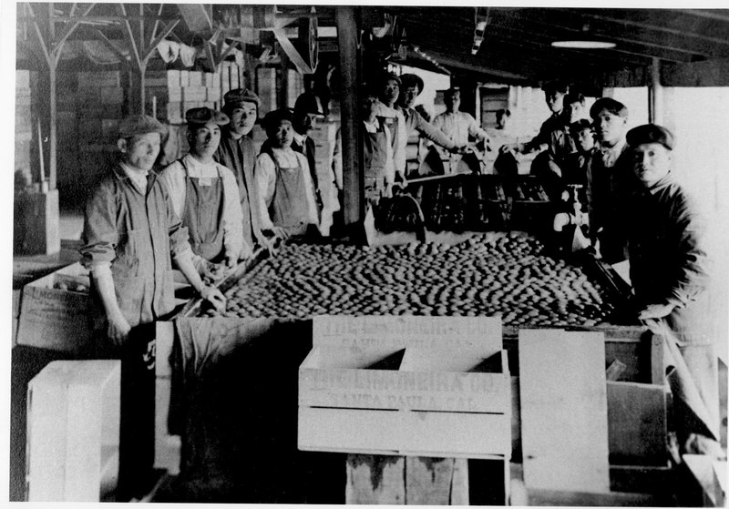 Japanese Workers at Limoneira