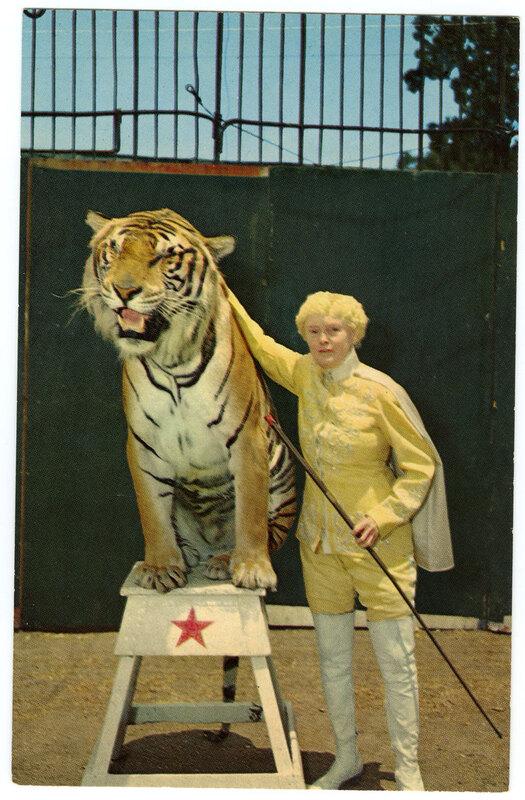Jungleland Tiger Trainer and Tiger postcard
