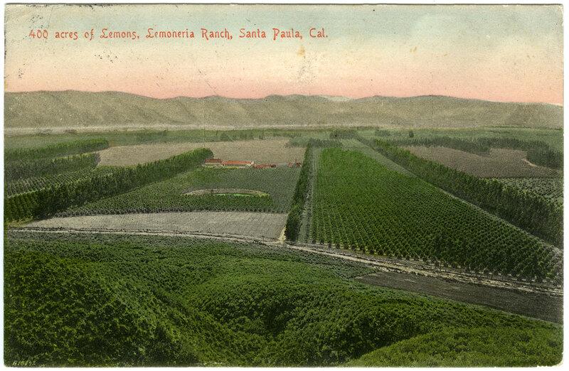 Four hundred (400) acres of Lemons, Limoneira Ranch postcard