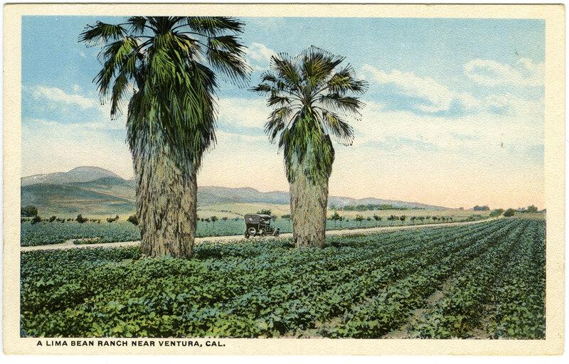 Lima Bean Ranch postcard