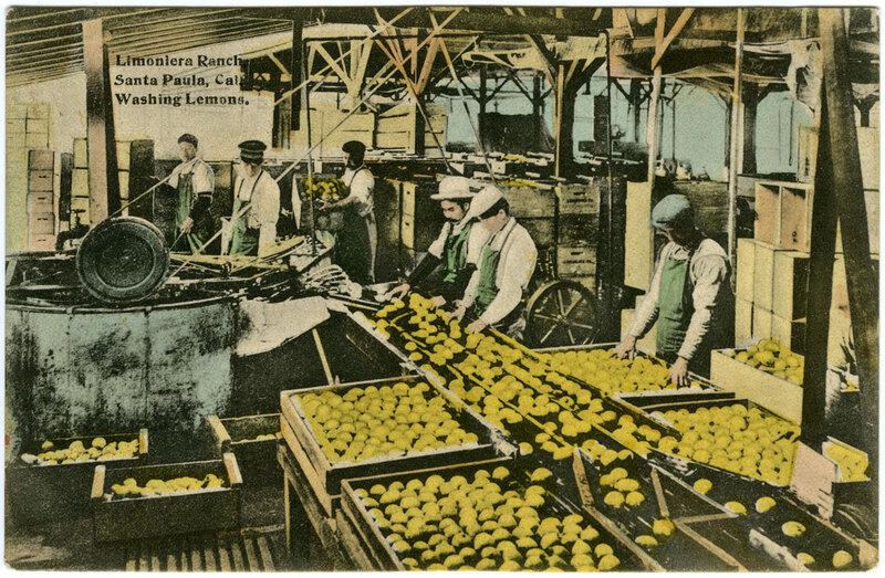 Limoneira Ranch, Washing Lemons postcard