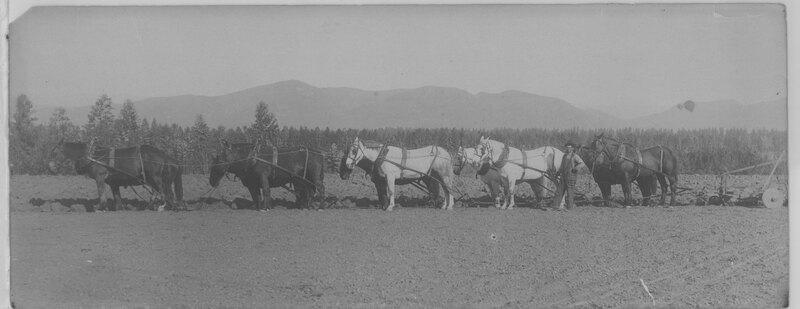 Ten Horse Team Pulling Plow on Hunt Ranch