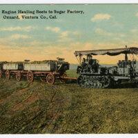 Caterpillar Engine Hauling Beets to Sugar Factory Postcard