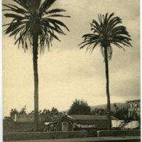 The Palms, Ventura Postcard