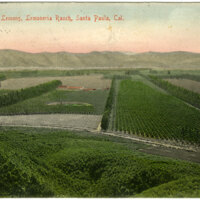 Four hundred (400) acres of Lemons, Limoneira Ranch postcard
