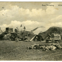 Bean Threshing, Ventura, post card