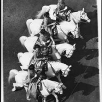 Camarillo White Horses In Formation (A)