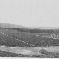 Limoneira Panorama