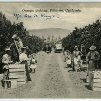 Orange Picking, Fillmore postcard