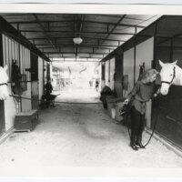 Nadine Webb with Camarillo White Horses