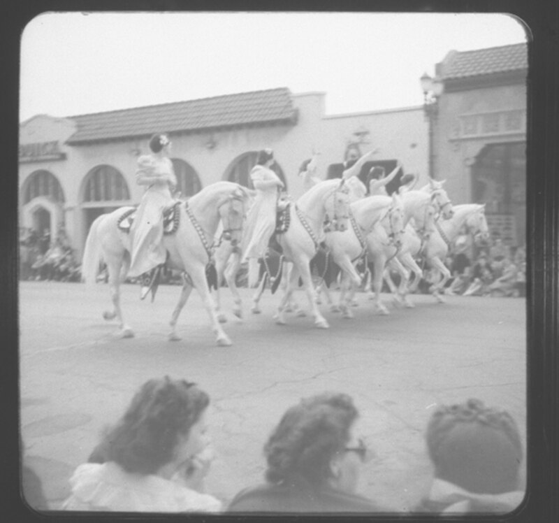 Camarillo White Horses on Parade