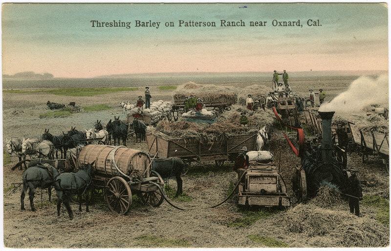 Threshing Barley on Patterson Ranch postcard