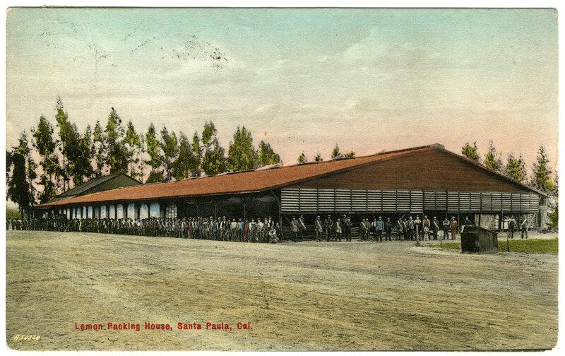Lemon-Packing House, Santa Paula postcard