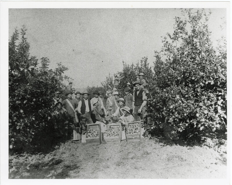 Citrus Workers