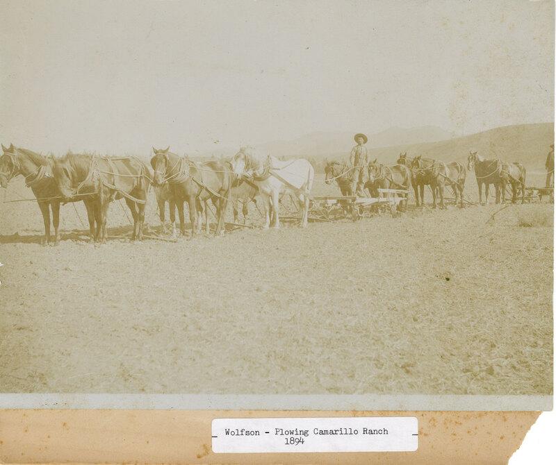 Billie Wolfson Plowing Calleguas Rancho