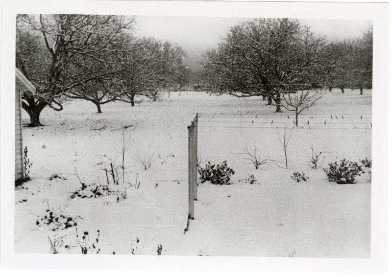 Snow on Middleton Ranch