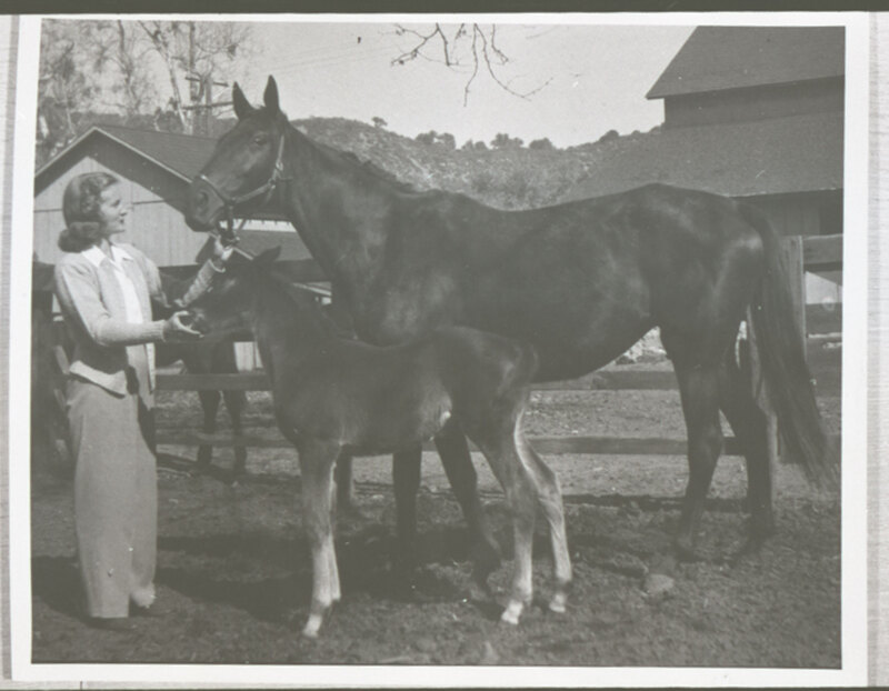 Katherine Hoffman Haley with Mare and Foal