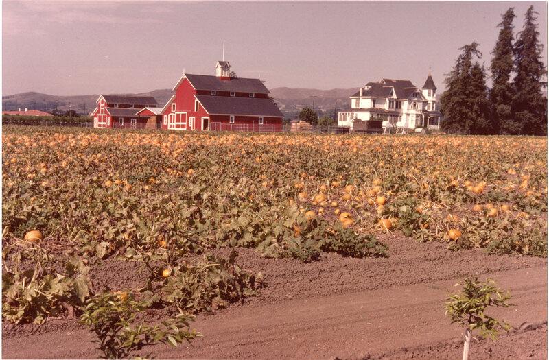 Pumpkins at Limoneira Ranch