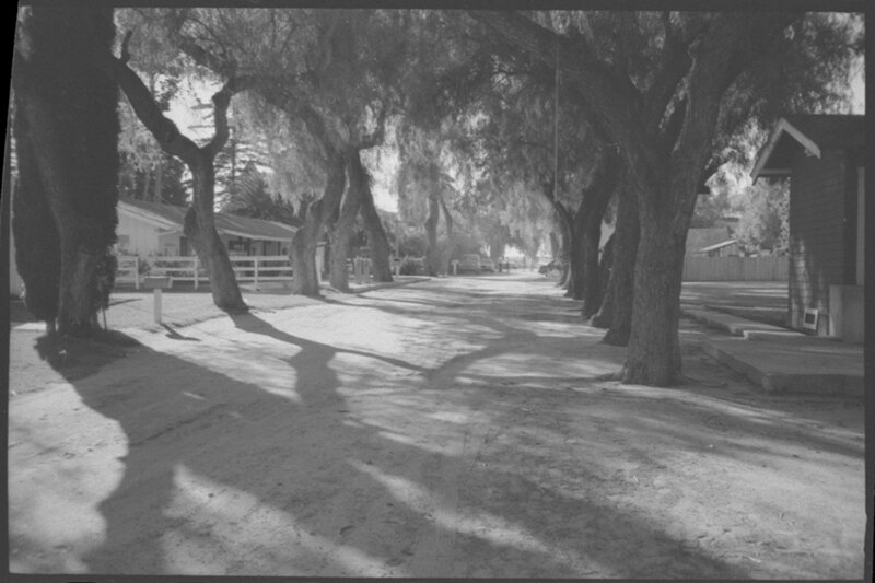Lane of Trees at Camarillo Ranch