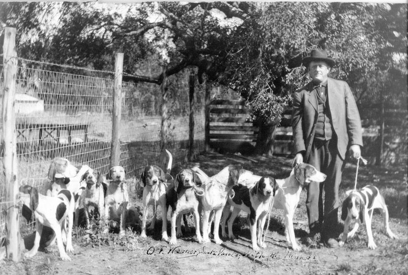 O. F. Warner With His Hounds