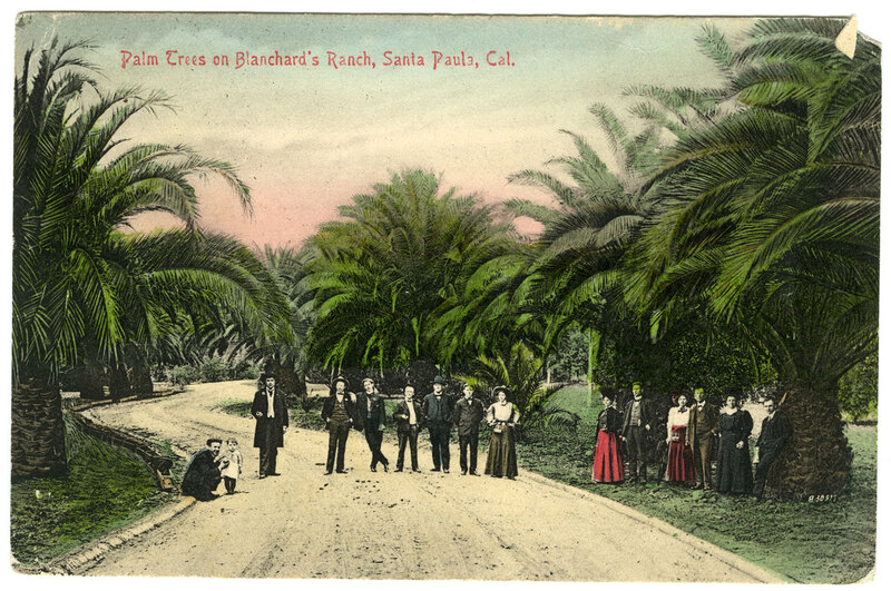 Palm Trees on Blanchard's Ranch Postcard