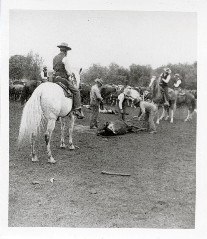 Group of Men Branding Cattle