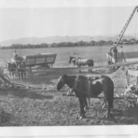 Workers in Lima Bean Fields, Santa Paula