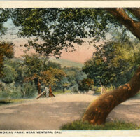 In Foster Memorial Park, Near Ventura, Cal. undated Postcard