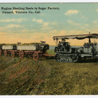 Caterpillar Engine Hauling Beets to Sugar Factory Postcard