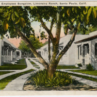 Employees Bungalow, Limoneira Ranch postcard