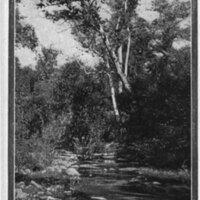 San Antonio Creek postcard
