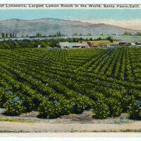 A View of Limoneira postcard