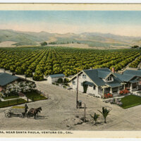 The Limoneira, Near Santa Paula Postcard