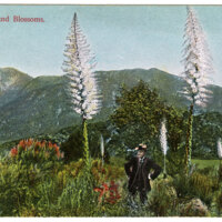 Yucca and Blossoms Postcard
