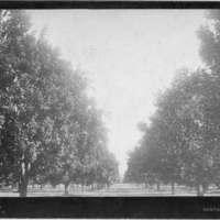 Orchard landscape