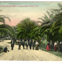 Palm Trees on Blanchard's Ranch Postcard