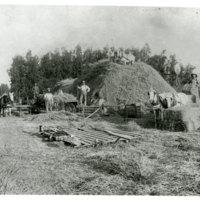Men and Horses Harvesting Hay